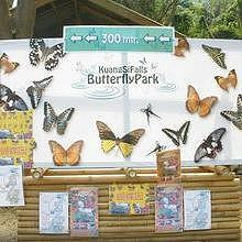 Entry of the Butterfly farm